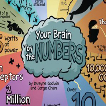 Your Brain by Numbers